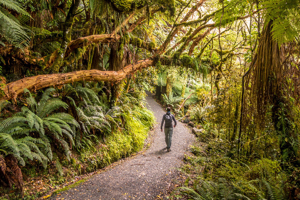 En pleine forêt, pour rejoindre la cascade de McLean