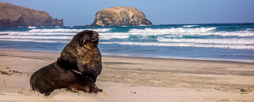 Notre première rencontre avec un sea lion! Inoubliable!