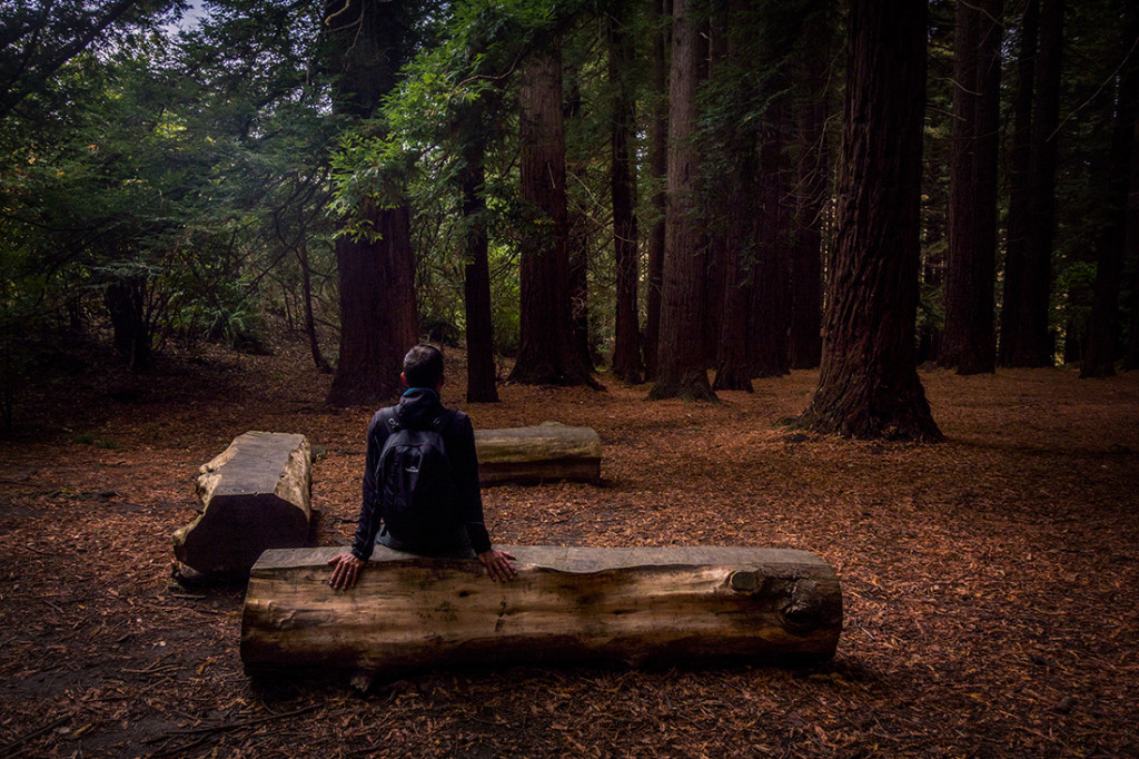 Petite pause dans la forêt de séquoias.
